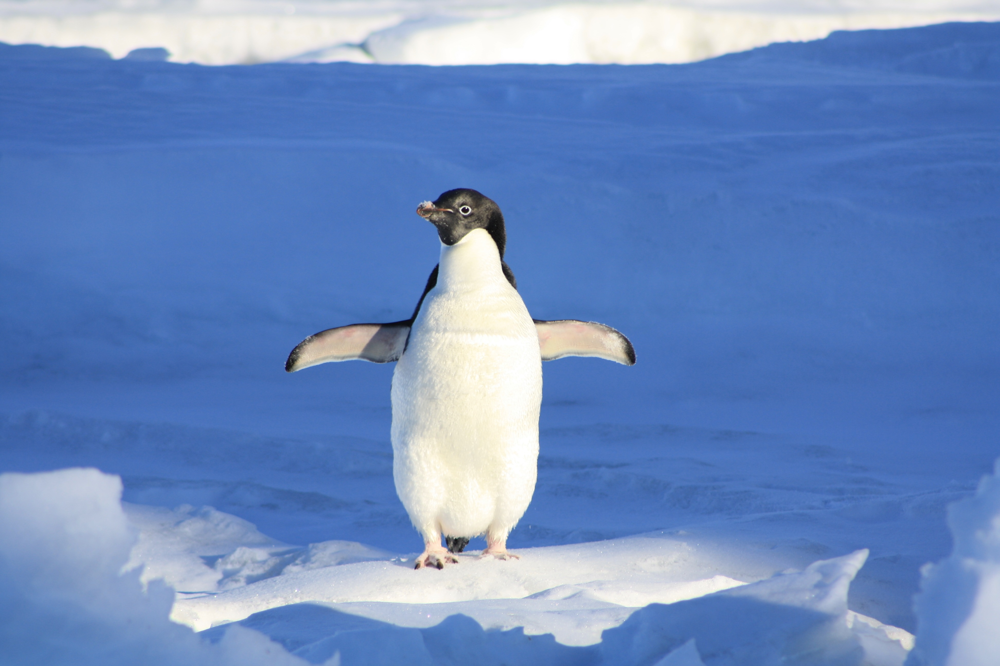 Googles Penguin und Google Possum